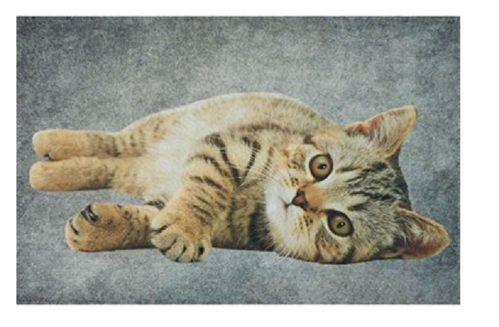 Matte Katze liegend